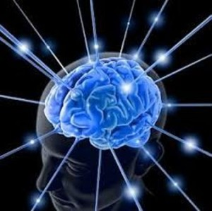 molecole cervello