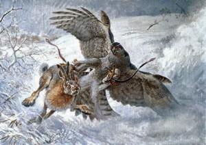 Falco a caccia