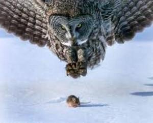 preda e predatore
