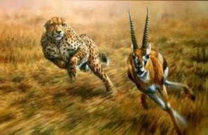 predatore e preda