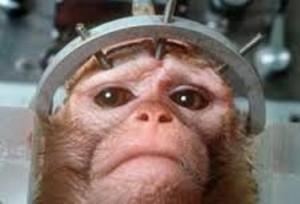 Esperimenti con scimmie