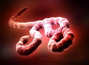 virus emergenti: Ebola Virus