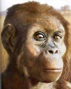 scimmia antropomorfa